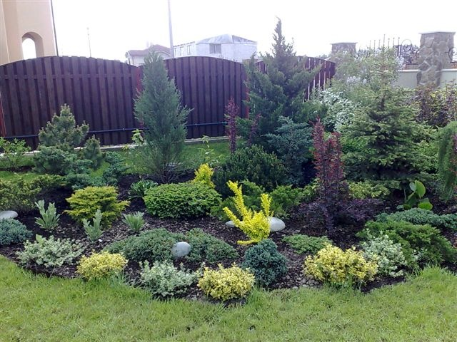 Дизайн хвойных в саду