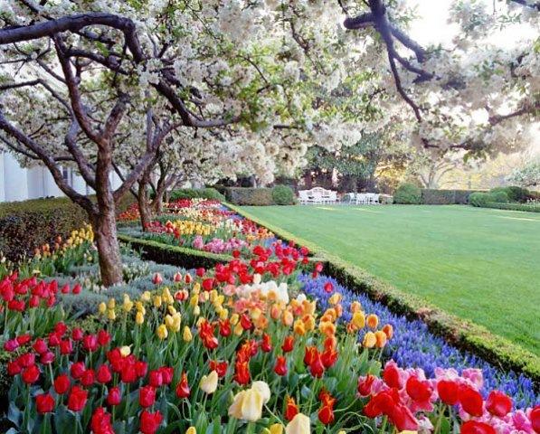 белые сады в июне