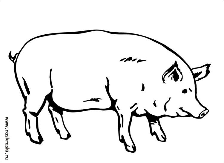 Картинка раскраска свиньи