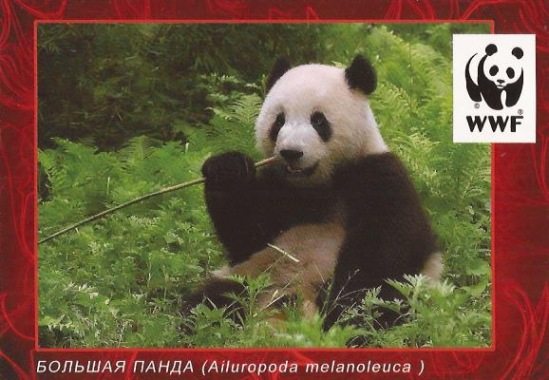 http://data10.i.gallery.ru/albums/gallery/358560-fa47c-93732842-m549x500-u5b801.jpg